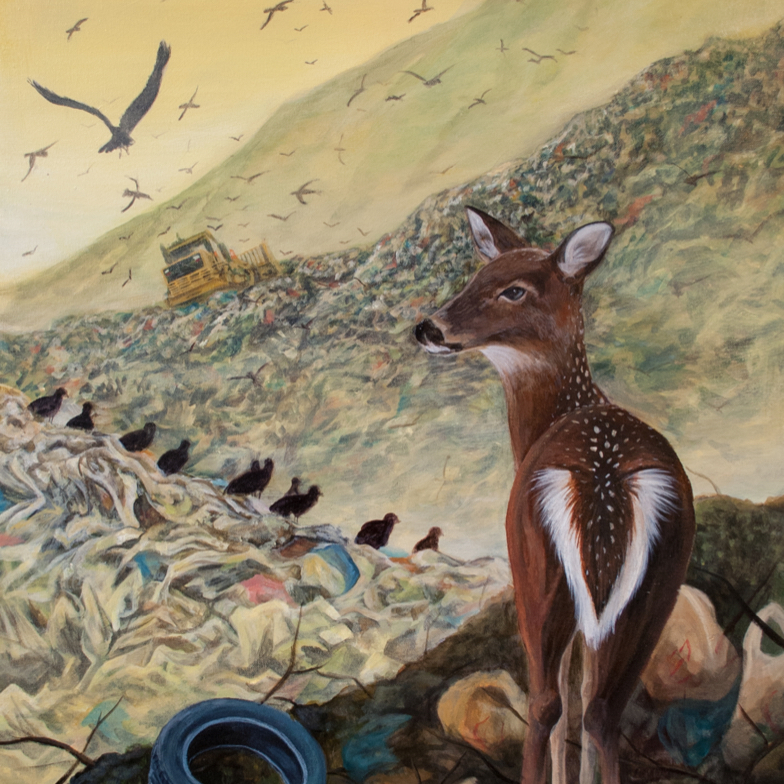 deer standing in landfill looking out at bulldozer