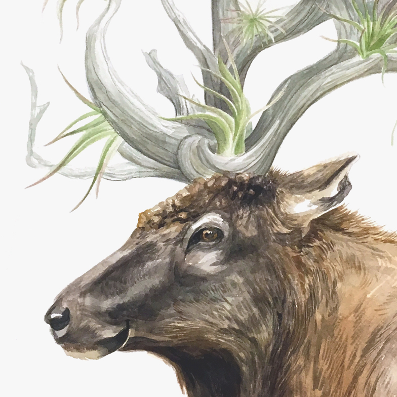profile view of an elk head with airplants danginling from antlers that look like driftwood