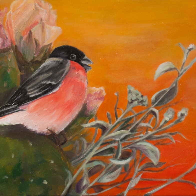 bird bullfinch sitting on a prickly pear at sunset